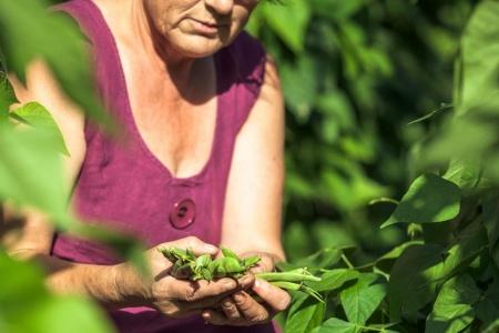 Wakacje w ogrodzie - sprawdź, jakie prace powinieneś w sierpniu wykonać w swoim ogrodzie
